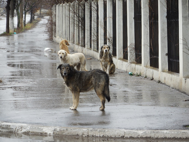 help strays this winter